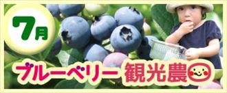 【7月】いわてまちブルーベリー観光農園